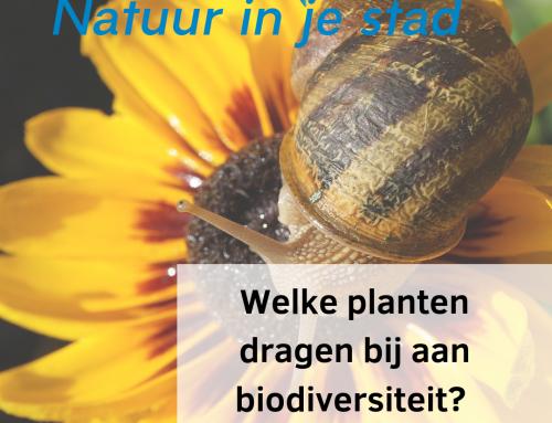 Welke planten in de tuin dragen bij aan biodiversiteit?