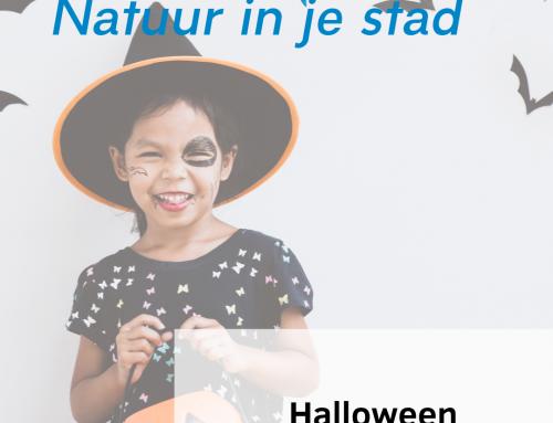 Halloween: Geschiedenis, wat en waarom?