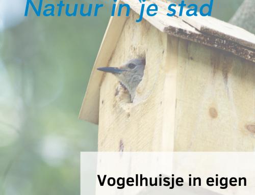 Vogelhuisje in eigen tuin