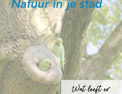 Serie: Wat leeft er in Haarlem – Groene halsbandparkiet