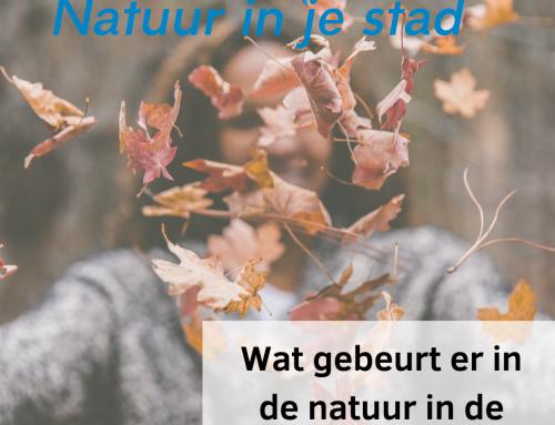 Wat gebeurt er in de natuur in de herfst?