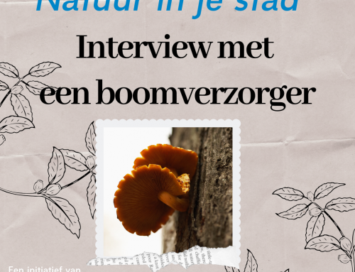 Inter­view met boom­ver­zor­ger Ste­fan Hart­man