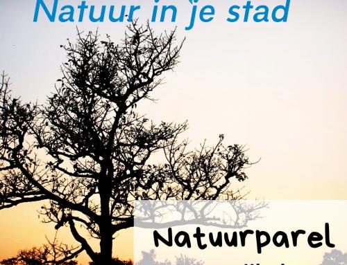 Natuurparel: Meerwijkplas