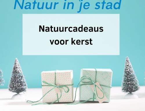 Natuurcadeaus voor kerst