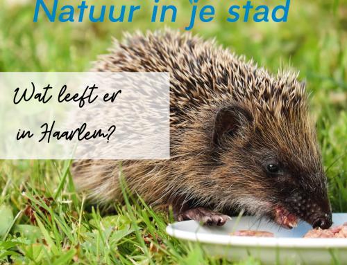 Wat leeft er in Haarlem? — De egel