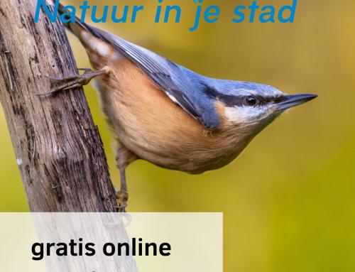 Gratis online vogelcursus