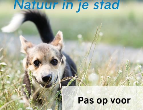 Hondenbezitters: pas op voor grasaren