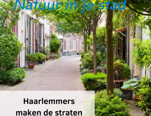 Haarlemmers maken de straten groener