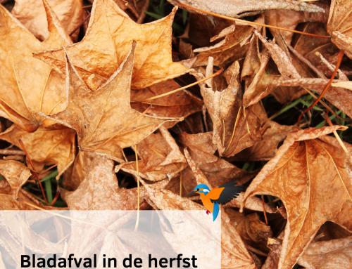 Gevallen bladeren in de herfst