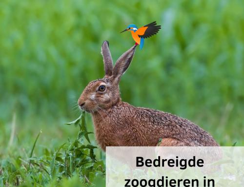 Het gaat niet goed met de zoogdieren in Nederland