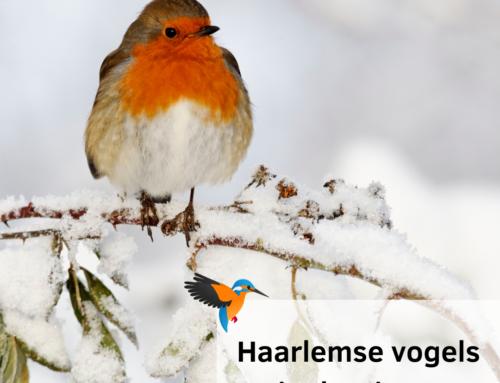 Haarlemse vogels in de winter