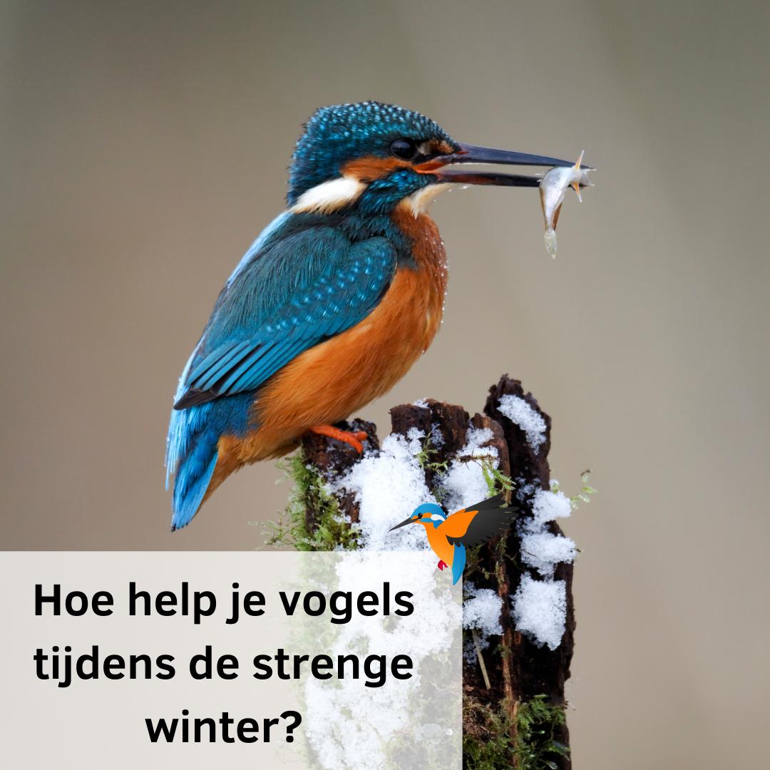 Hoe help je watervogels de strenge winter door?