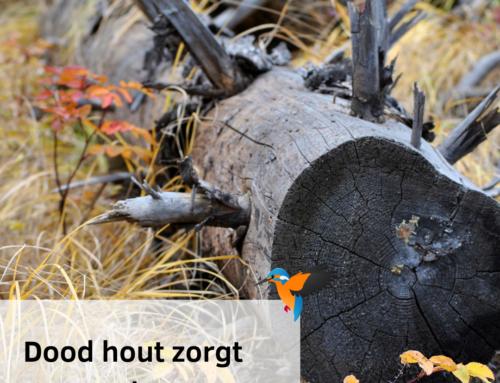 Dood hout zorgt voor leven