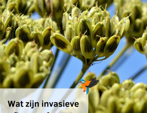 Wat zijn invasieve flora enfauna?