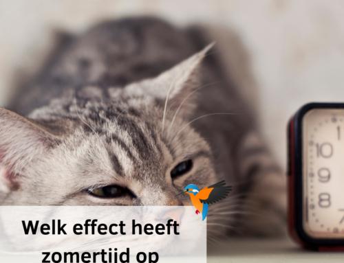 Welk effect heeft zomertijd op dieren?