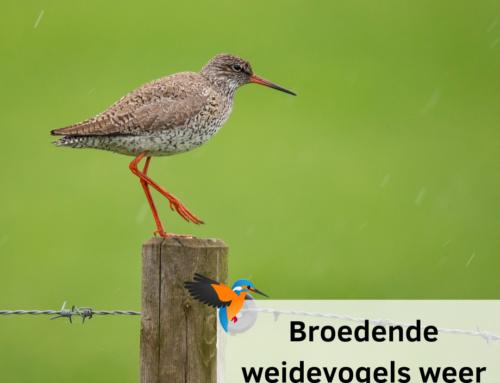 Broedende weidevogels weer beschermd in de Hekslootpolder