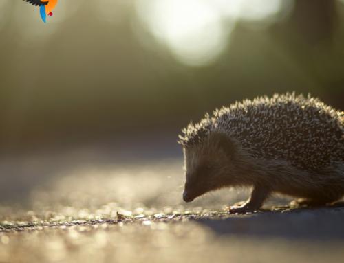 Doe jij ook mee met de Natuurwerkdag?
